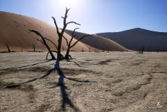 Awesome View at Dead Vlei in the Namib Desert, Namibia