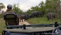 Elephants crossing the Road in front of the Game Drive Vehicle in Hwange National Park, Zimbabwe
